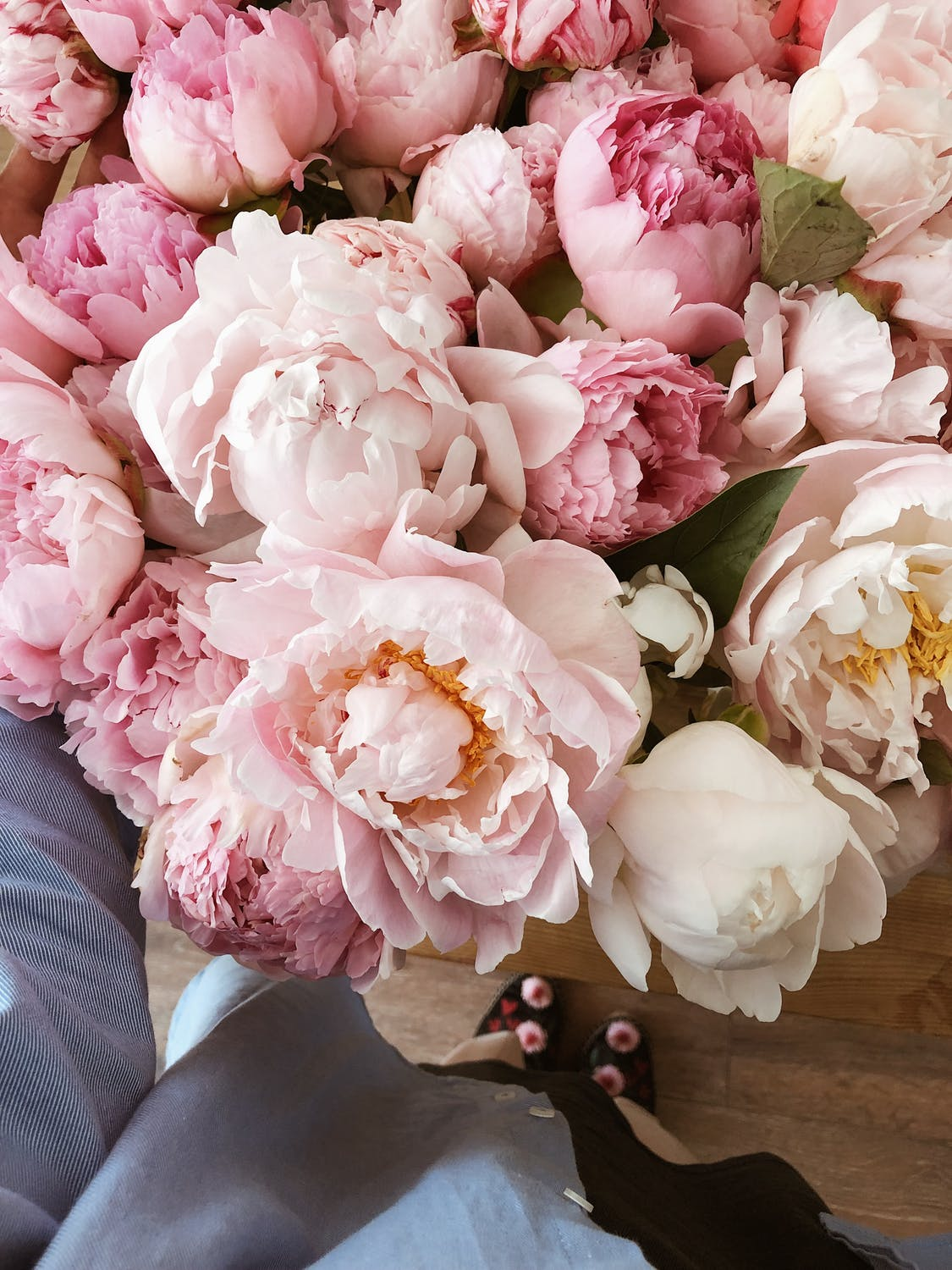 Flower iphone wallpapers, peony wallpapers
