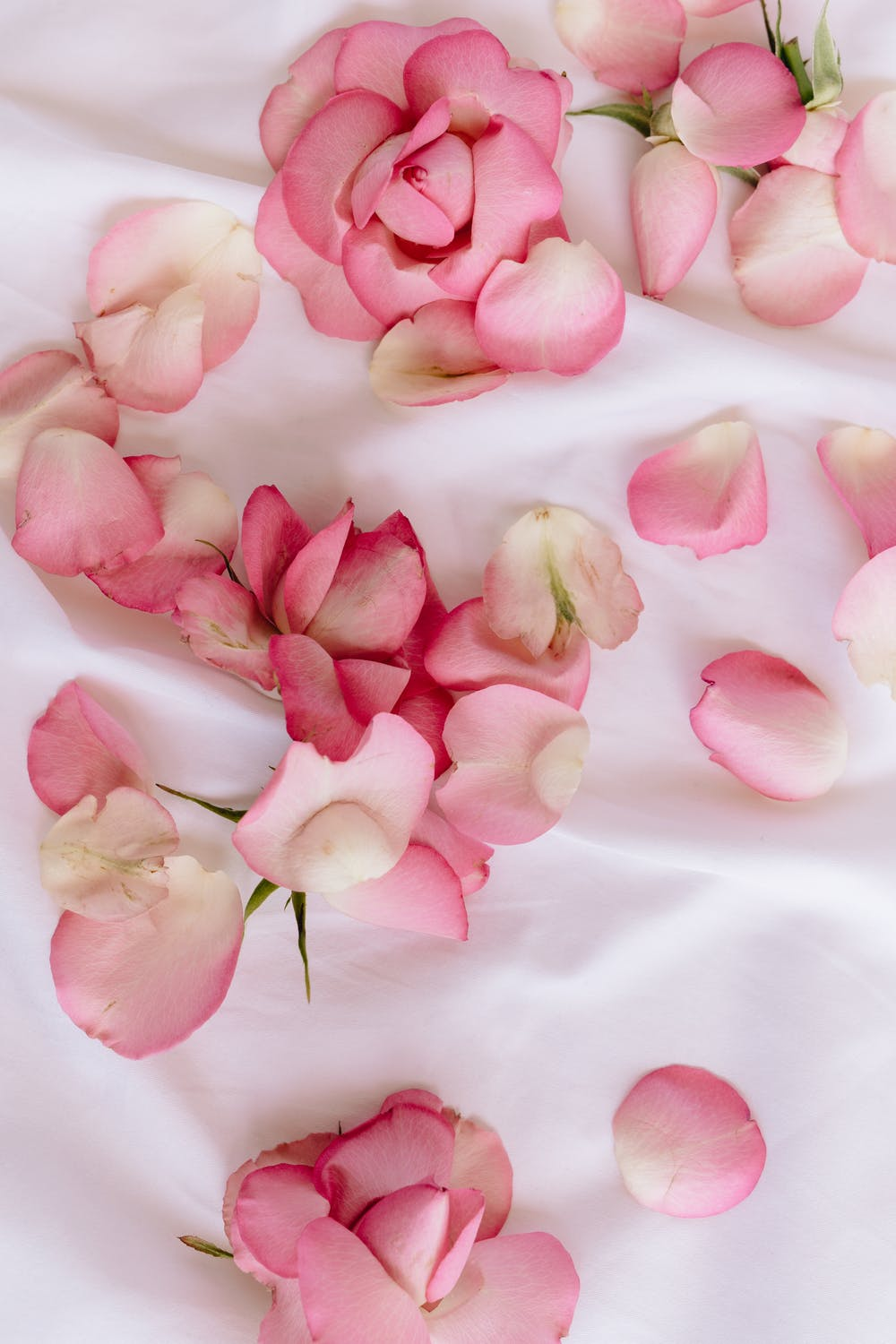 Pink rose petals iPhone wallpapers, pretty flower wallpapers