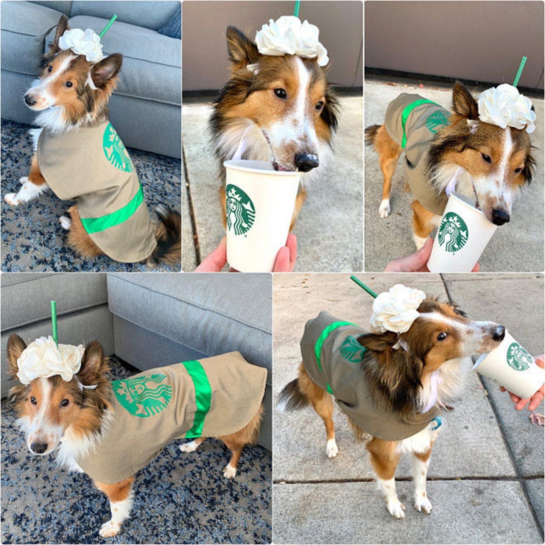 Dog Starbucks frappuccino Halloween costume