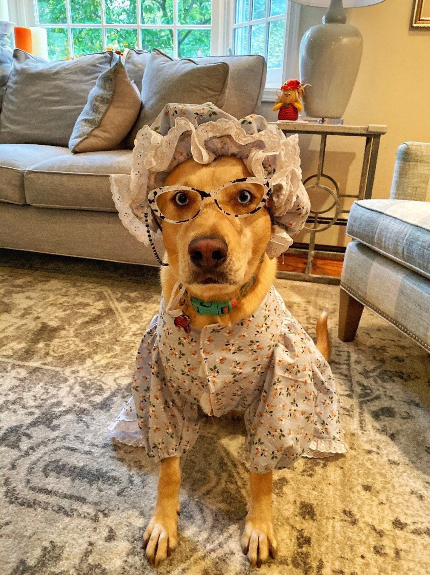 Old grandma Halloween costume with robe and bonnet for large dogs