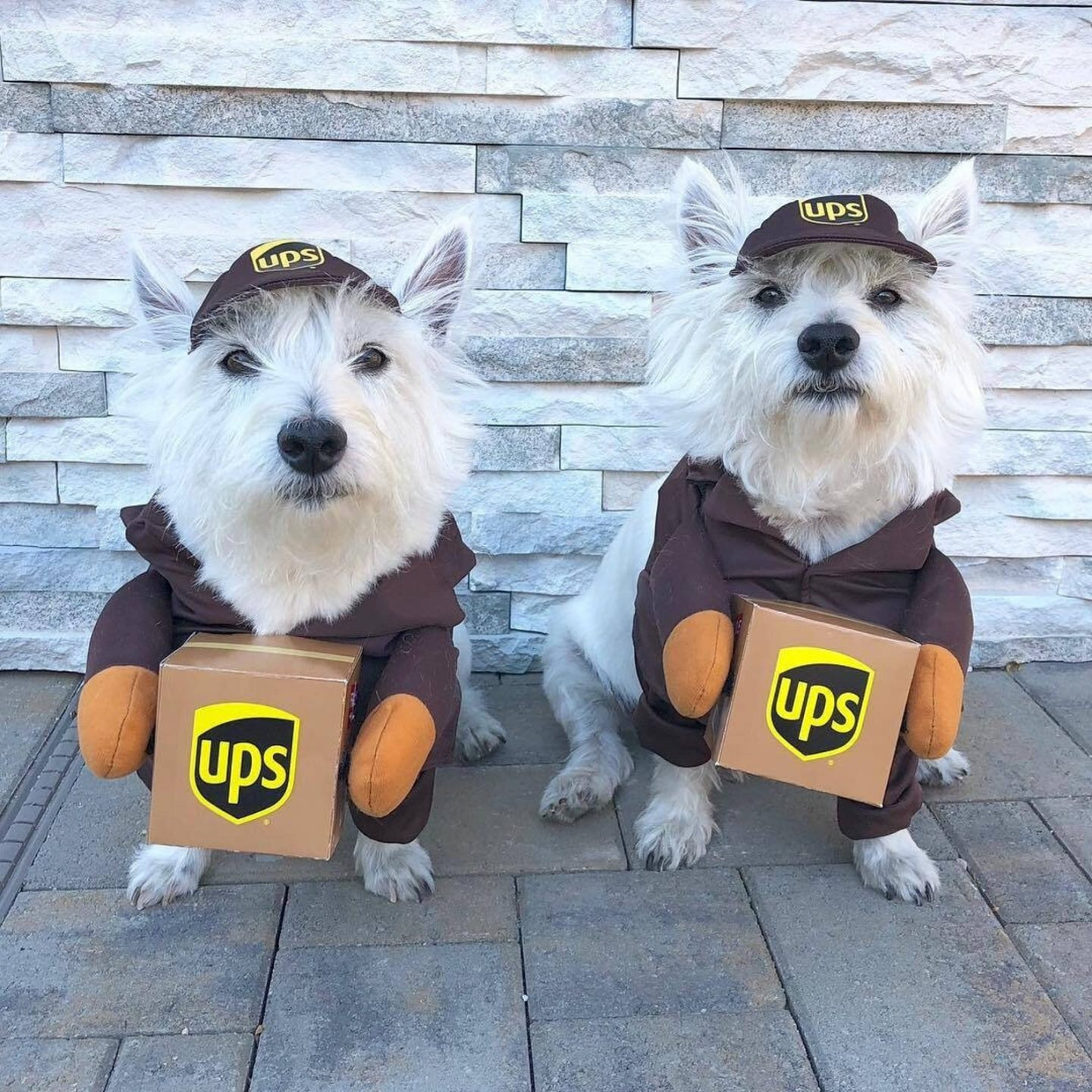 UPS Halloween costume for small sogs