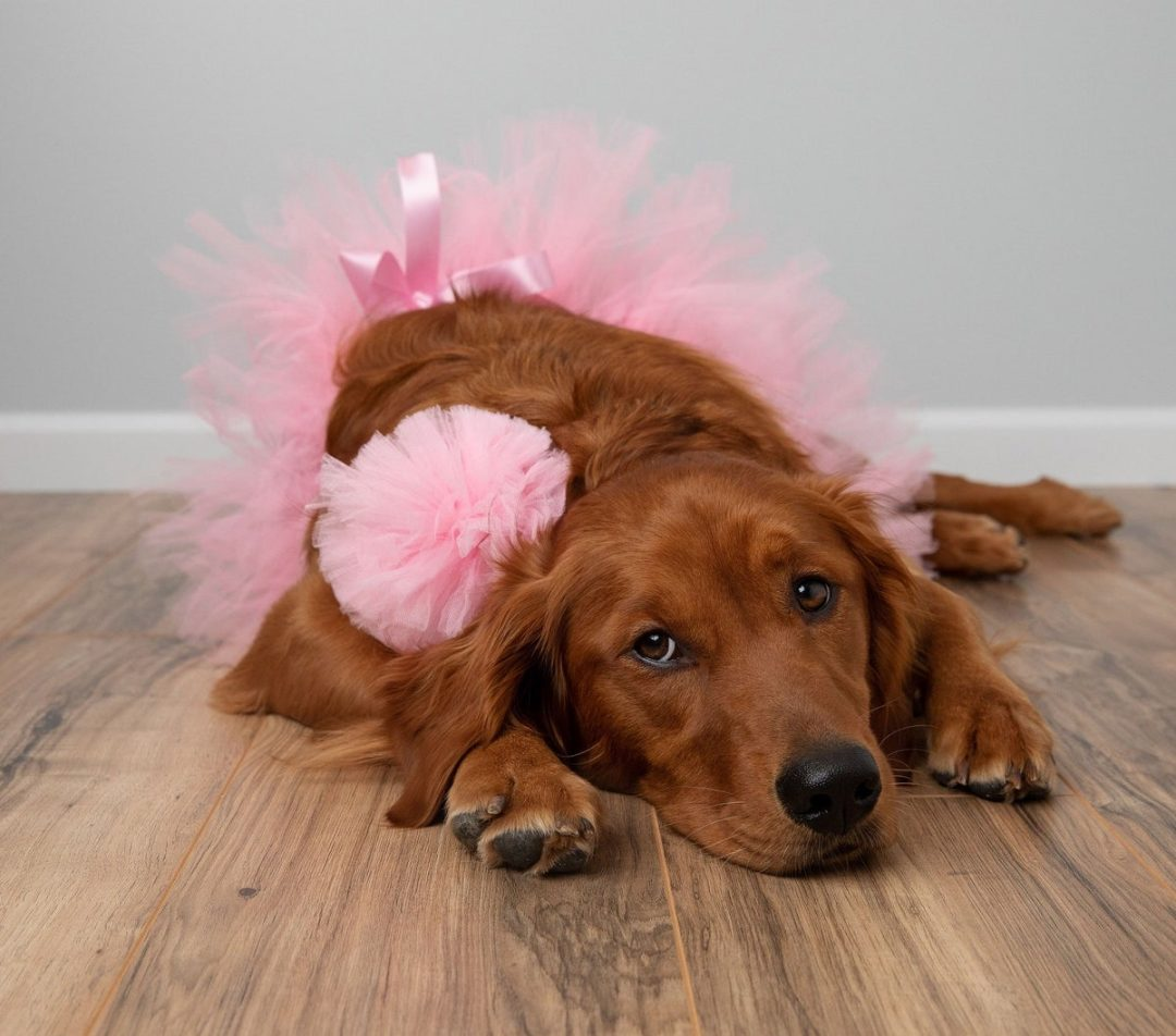 Cute pink tutu for dogs, worn by brown golden retriever