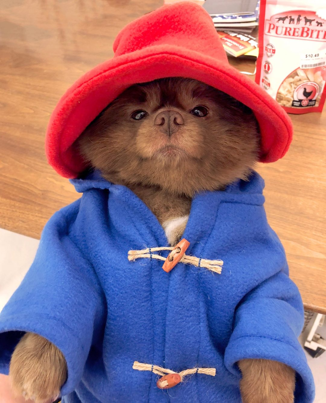 50 Insanely Cute Dog Halloween Costumes That You Need To See