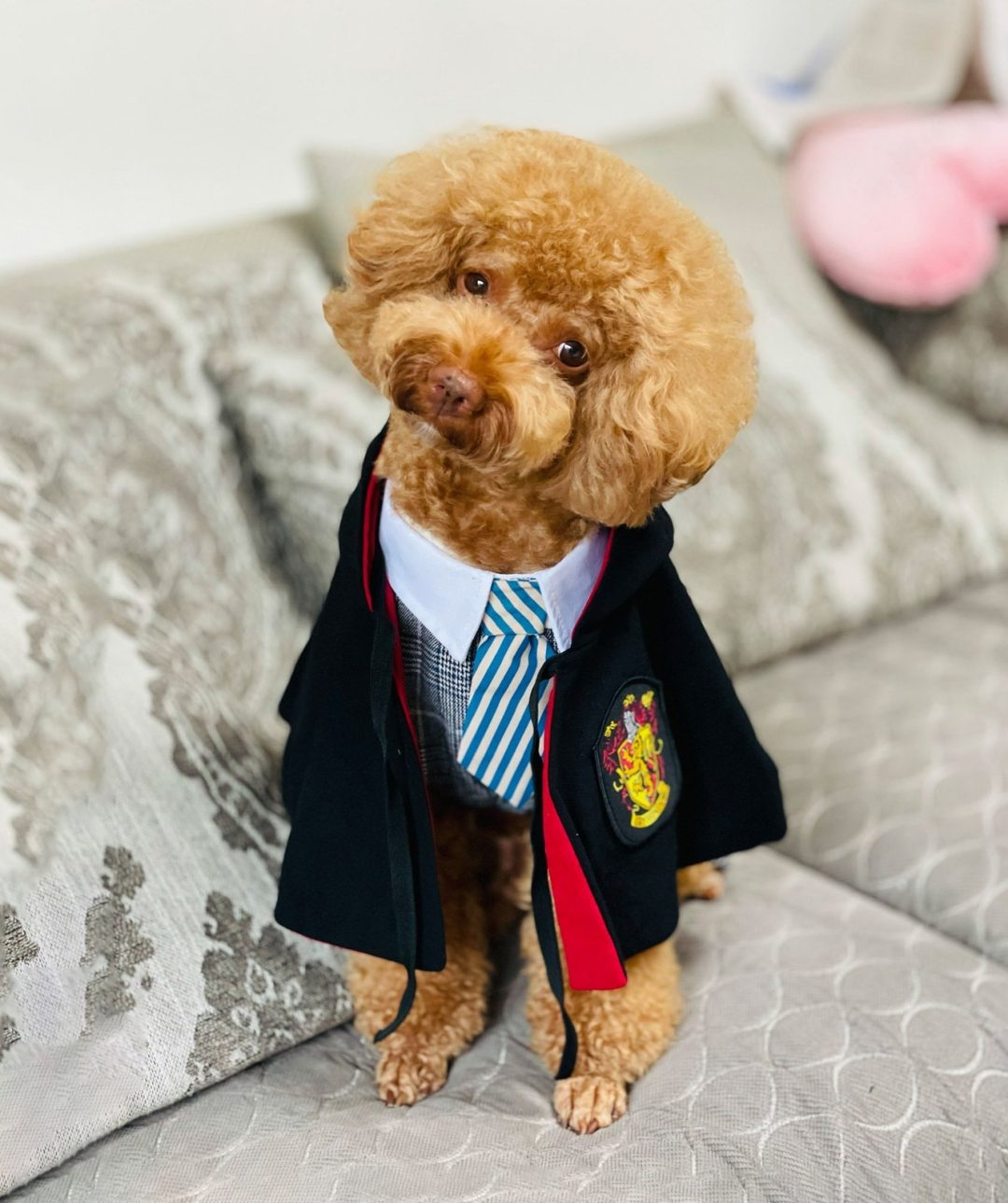 Harry Potter Halloween costume for dogs