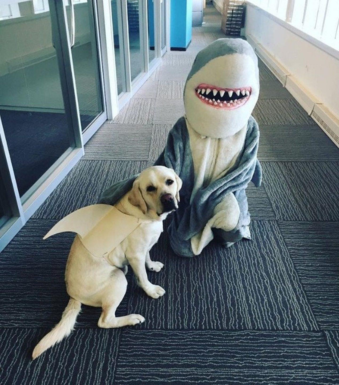 Shark Halloween costume for dogs