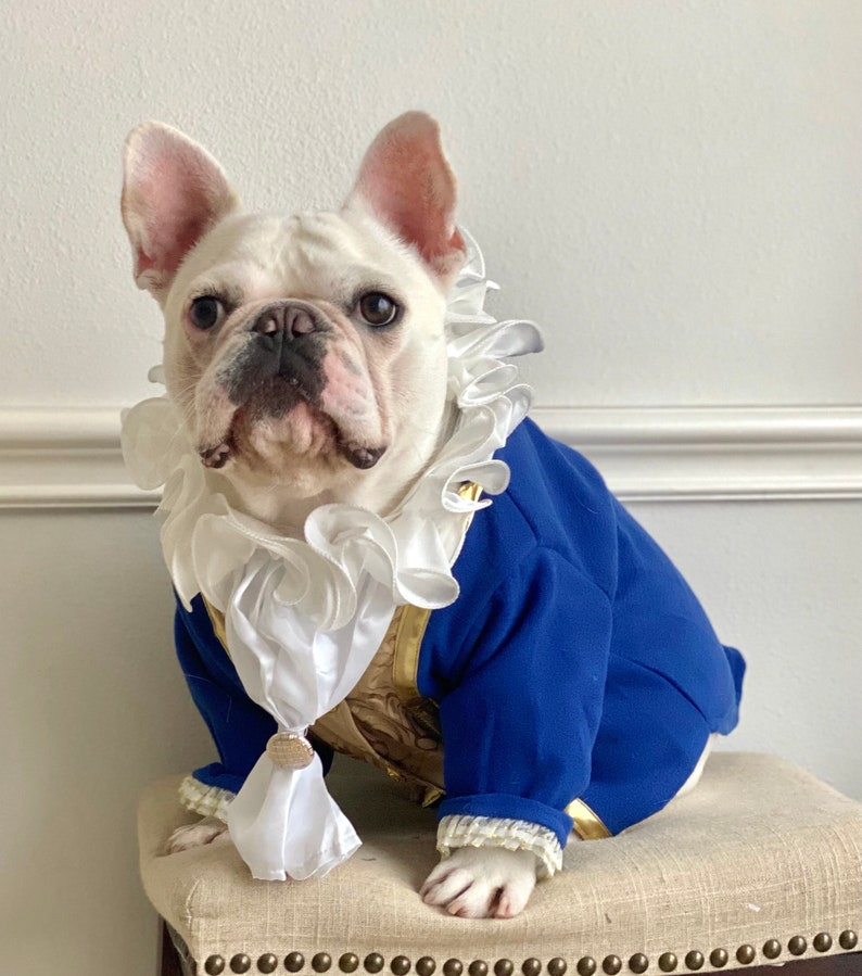 Beauty and the beast Halloween dog costume for small dogs like French bulldogs