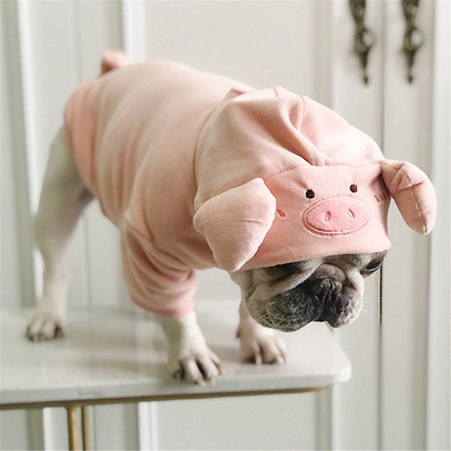 Pig Halloween costume for small dogs