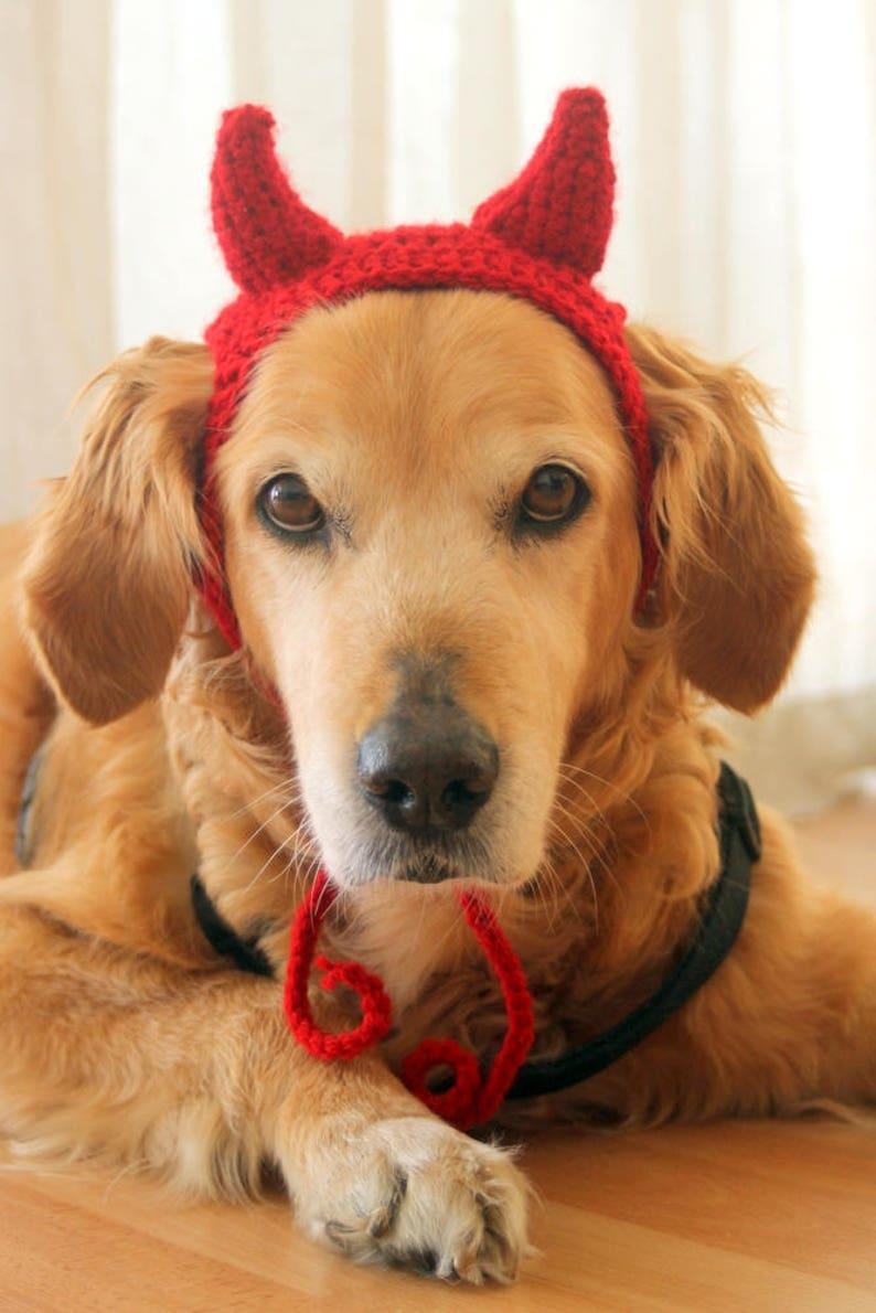 Devil horns dog Halloween costume