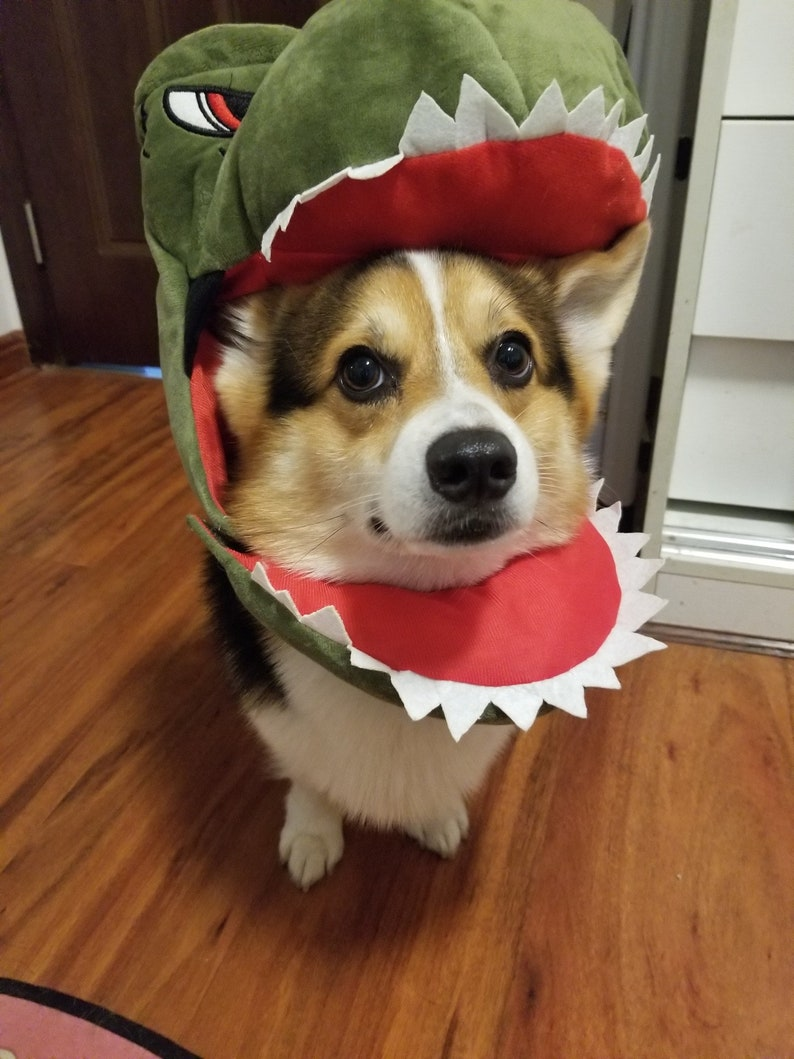 Dinosaur dog Halloween costume