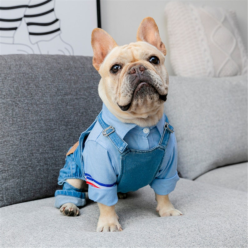 Denim overalls dog costume for small dogs like French bulldog