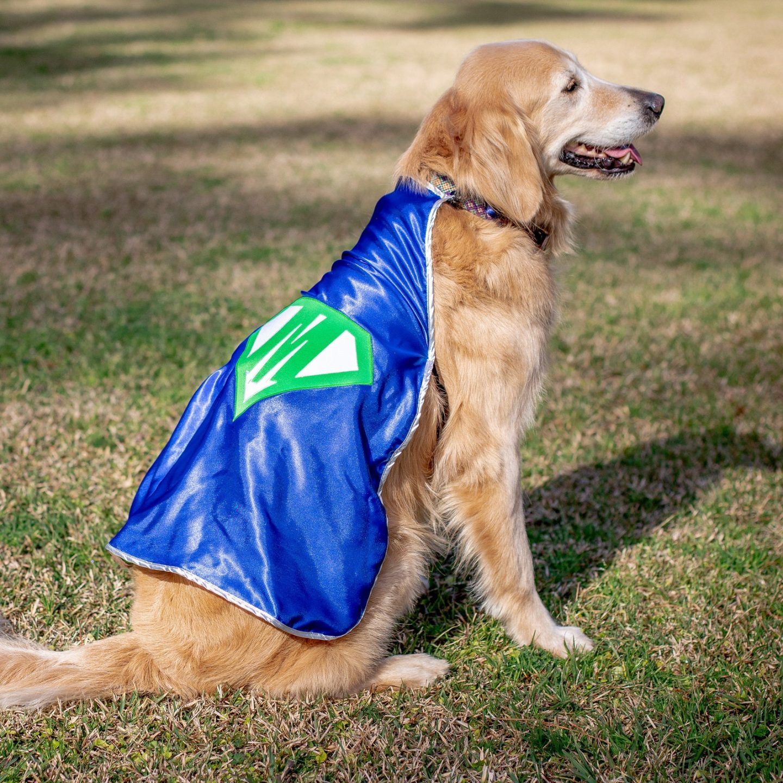 Superhero dog Halloween costume for big dogs