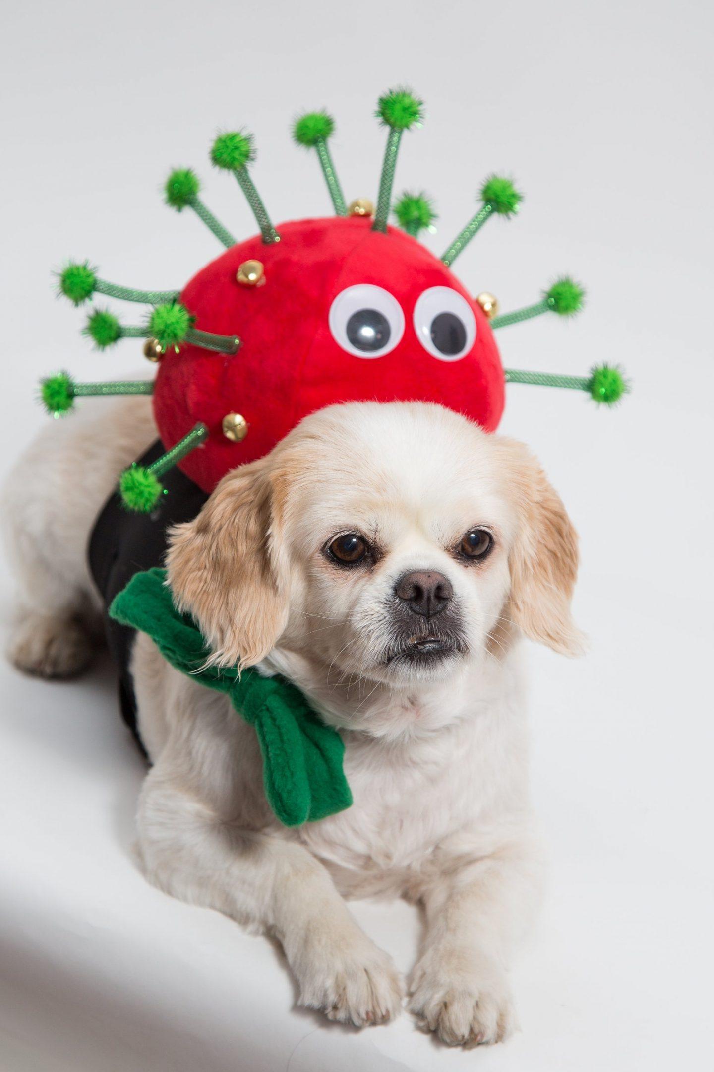 Cute virus dog Halloween costume