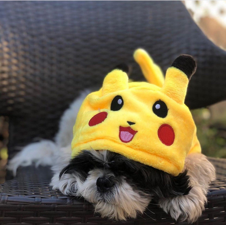 Pikachu dog Halloween costume