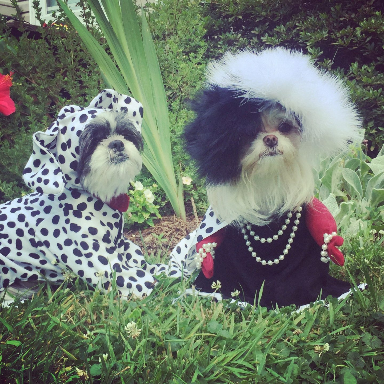 Cruella De Vil & Dalmatian Halloween costumes for small dogs