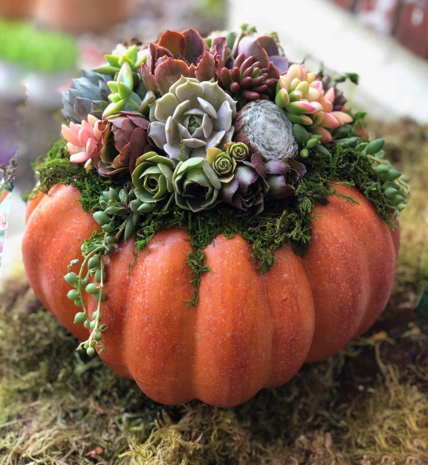 Pumpkin Fall Centerpiece With Succulents