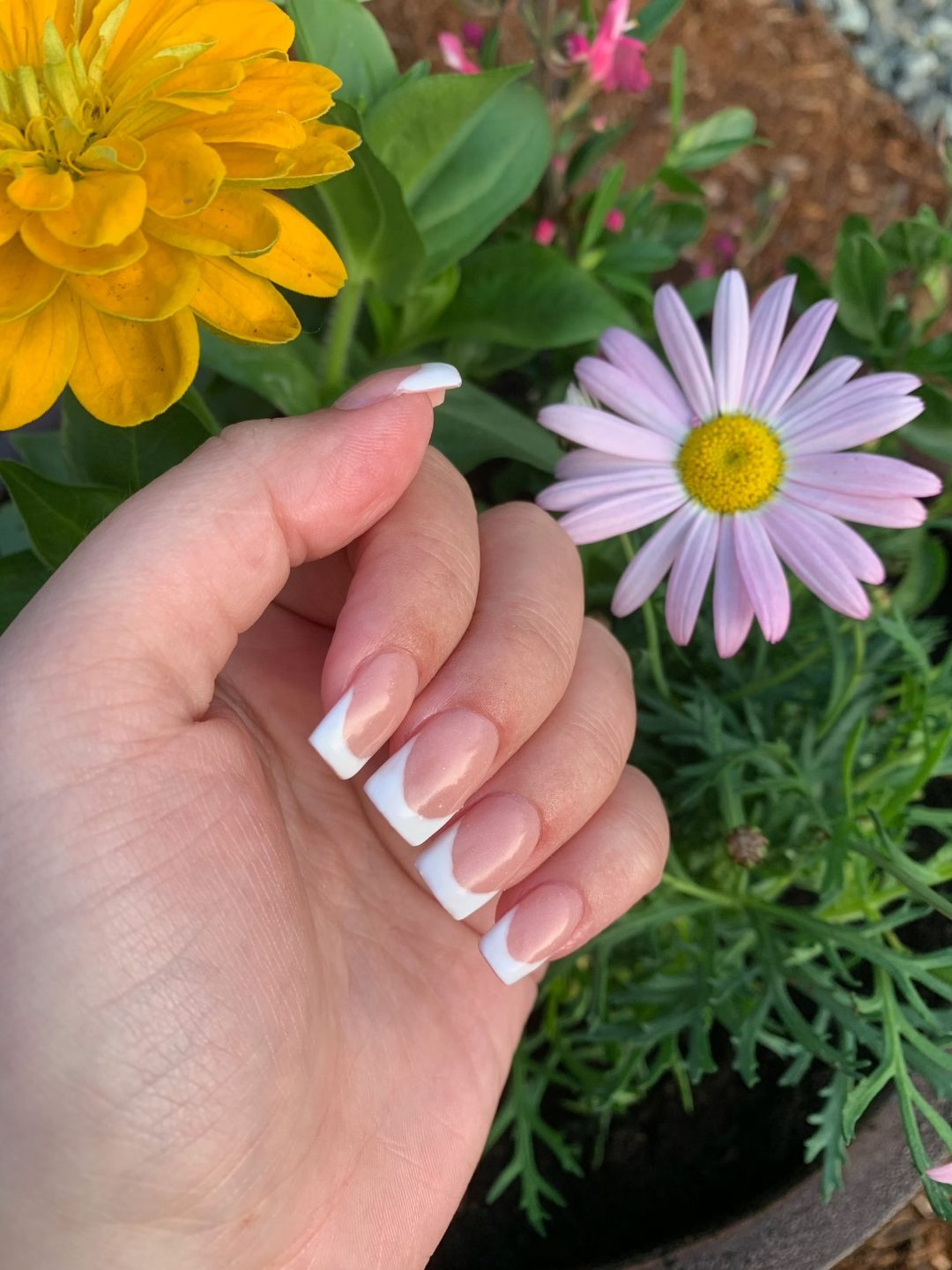 Simple white french tip square nails